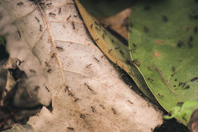 formiche nelle piante